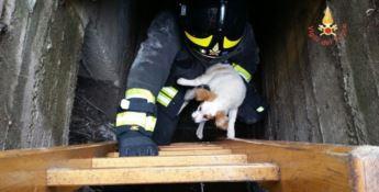 Storia a lieto fine, un cane precipita in un canale di scolo: salvato dai pompieri