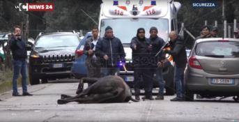 Il momento dell'uccisione del toro