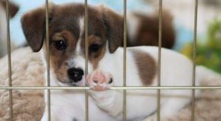 Fuscaldo, cuccioli di cane salvati da una casa in fiamme