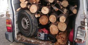 Borgia, sorpreso ad abbattere abusivamente alberi si dà alla fuga