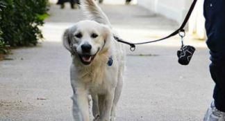 Pianopoli, il sindaco Cuda pronto a pubblicare i video di chi non raccoglie i bisogni dei propri cani