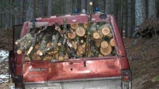 Furto di legna nel parco della Sila, due arresti
