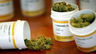 Cannabis terapeutica, Mirabello (Pd) presenta il progetto di legge regionale