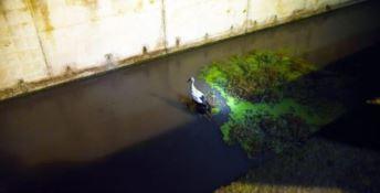 Investita da un'auto finisce in un canale, cicogna salvata