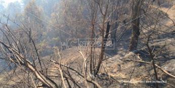 Catanzaro, da due giorni brucia la collina di Stalettì