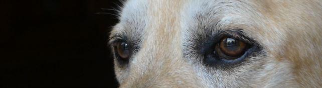 Si è spento Dylan, il cane che ha commosso il web