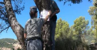 Incendi nel Cosentino, sigilli a 210 ettari di pinete