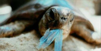 Stragi di tartarughe marine: il peggior nemico è l'uomo