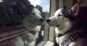 In treno con Fido, su Italo biglietti gratis per cani di media-grossa taglia