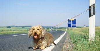#Amamiebasta. Anas e Lega nazionale del cane insieme contro l'abbandono