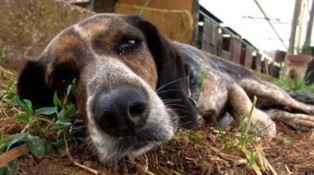 La mattanza: come evitare le esche avvelenate e salvare la vita al proprio cane