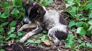 Civilina, il cucciolo salvato a Mongiana
