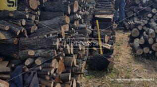 Taglio di alberi non autorizzato, una persona denunciata