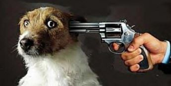Zoomafie, i reati contro gli animali che foraggiano le 'ndrine