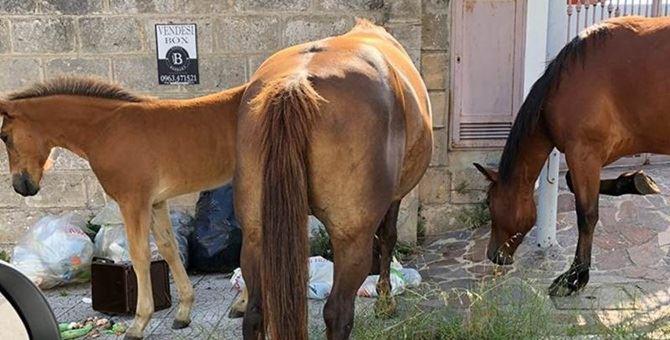 I cavalli liberi per le strade di Vibo