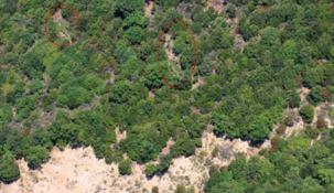 Le piantagioni in Aspromonte