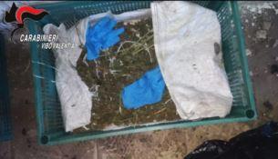 Marijuana a Joppolo