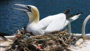 Inquinamento: gli uccelli ormai costruiscono nidi di plastica