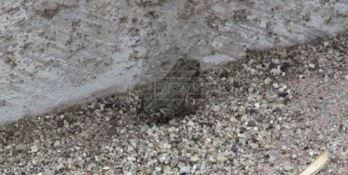 Da Vibo alle Marinate, degrado e invasione di rane