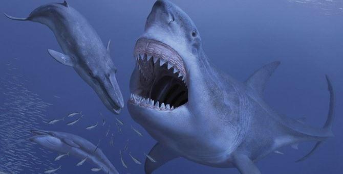 Squali enormi predavano le balene milioni di anni fa