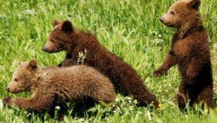 Cuccioli di orso maltrattati trovano casa a Roma