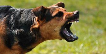Per sfuggire ad alcuni cani cade dalla bici, grave turista nel Vibonese