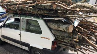 La legna tagliata