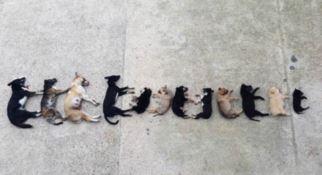 Orrore a Santa Sofia di Epiro: 15 cani uccisi con veleno