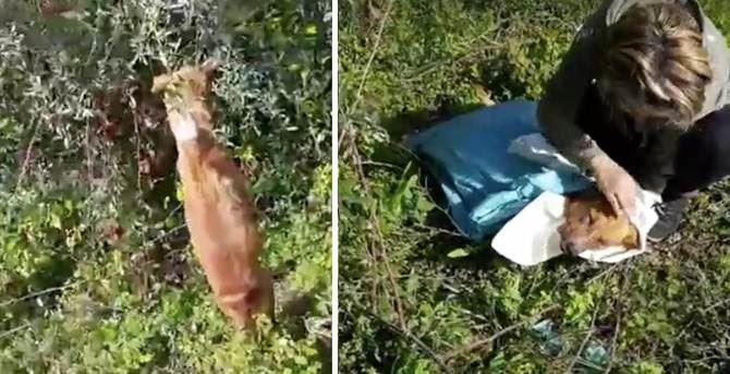 Cane impiccato a Bovalino