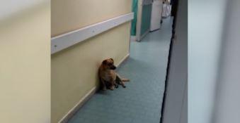 Cucciolo cerca riparo in corsia, ad accudirlo ci pensa il personale dell'ospedale (VIDEO)