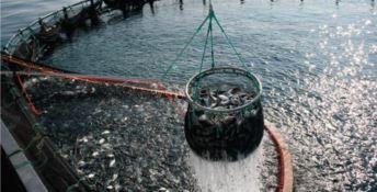 Interventi per 6,5 milioni di euro nel settore della pesca in Calabria