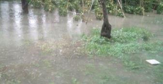 Maltempo, danni per cinque milioni all'agricoltura in Calabria