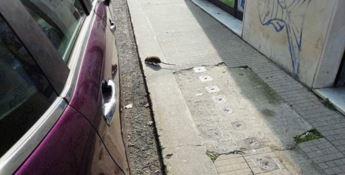 Catanzaro, il quartiere Stadio infestato dai topi
