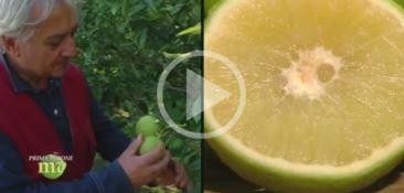 Sua maestà il bergamotto: a Melaverde i prodotti made in Calabria (VIDEO)
