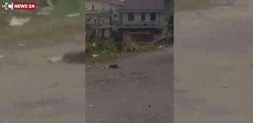 Topi grandi come gatti nel centro di Rosarno - VIDEO
