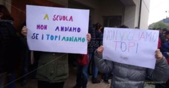 San Pietro a Maida, classi infestati dai topi: genitori e alunni in protesta