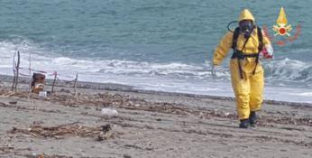 Fusto spiaggiato a Roccelletta: nessun rischio contaminazione