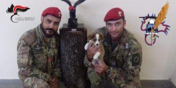 Implacabili con i latitanti, amorevoli con il cucciolo: i Cacciatori lo adottano
