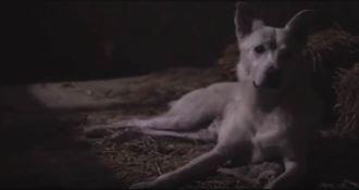 Cane ucciso a Sangineto, la storia di Angelo diventa un film. La presentazione a Milano