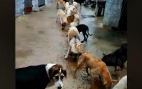 Canile allagato per il maltempo a Cirò, 250 cani cercano casa