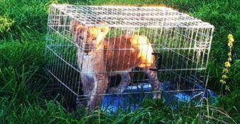 Abbandonano un cucciolo di leone nel parco, indagini