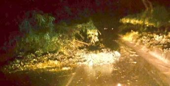 Smottamenti e alberi abbattuti nella notte a Cortale