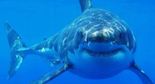 Attenti agli squali, il 50 per cento rischia l'estinzione. Parte la campagna Wwf