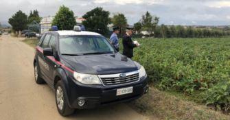 Roggiano Gravina, sfruttava extracomunitari: arrestato imprenditore agricolo