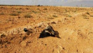 Avvelenata Bianca, l'avvoltoio partito dall'Italia per svernare. Il Cerm:«A rischio futuro della specie»