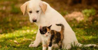 """Adottare un cane o un gatto, ecco l'iniziativa di """"Zampe in salvo"""""""