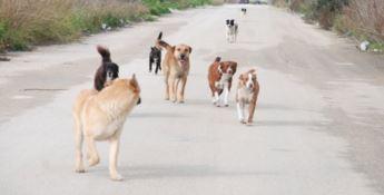 Sequestrato un canile illegale a Crotone, denunciato il responsabile