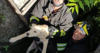 Il cucciolo tratto in salvo