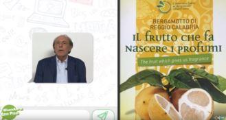 Bergamotto di Calabria, il Whatsapp di Ezio Pizzi
