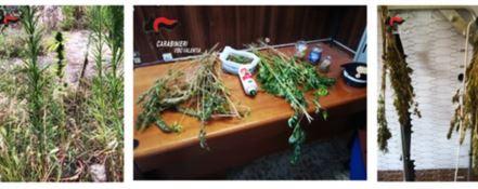 Piantagione di marijuana recintata, un arresto a Gerocarne
